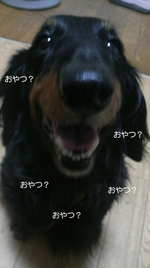 嬉しそう☆