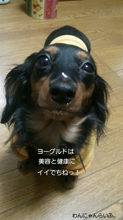 ビフィズス菌☆