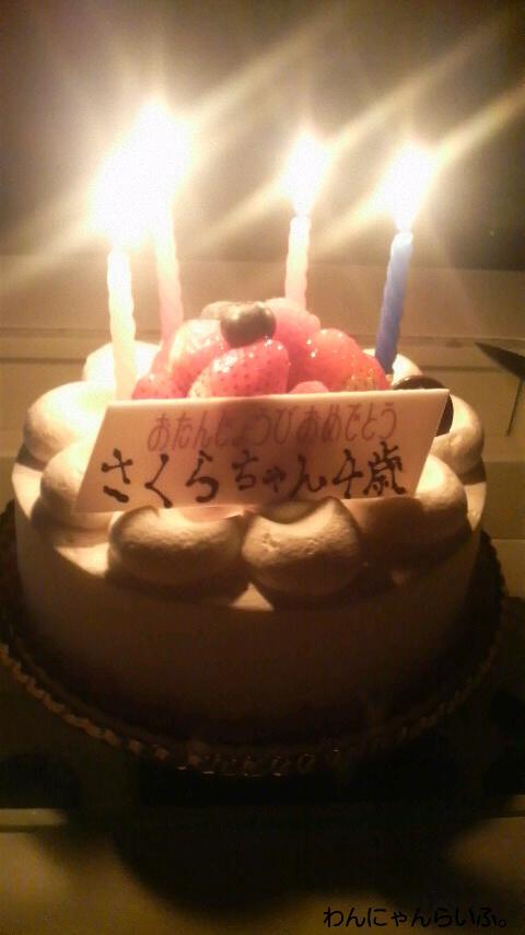 さくらの誕生日☆