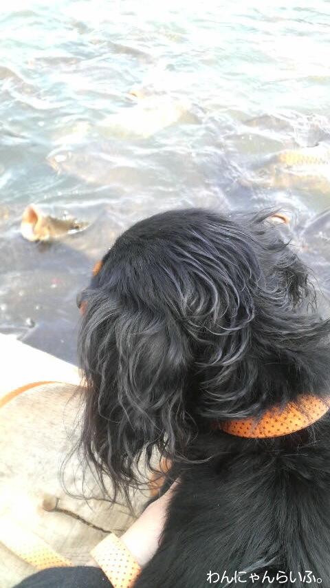 高松の池☆