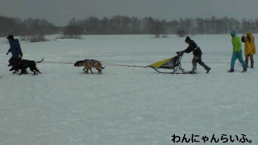全国犬ぞりフェスティバルin<br />  金ヶ崎