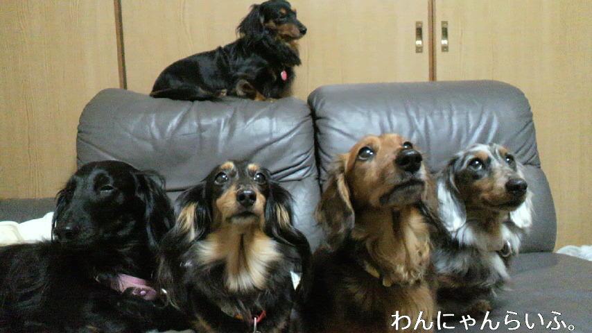 犬口密度。