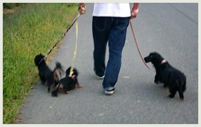 5わんず散歩