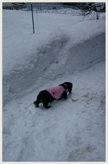 すごい雪。