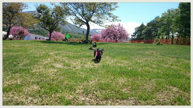 dog walk。